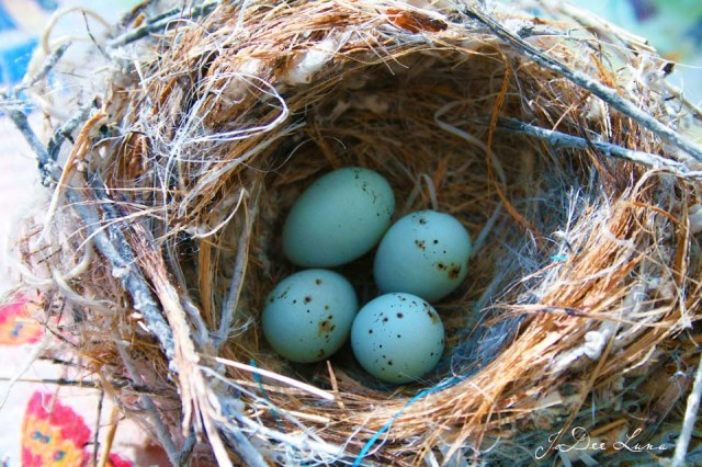 Blue Eggs with Brown Speckles in Nest