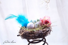Nest_With_Blue_Feather_966