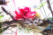 Rose_on_Branch_960